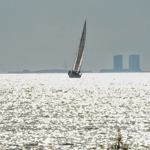 Sailing Sailboat Check This Out Silversea Reflection Skyline Sea Sea And Sky Hanging Out Freedom Recreation  Chilling Skåne Sweden Copenhagen Skyline