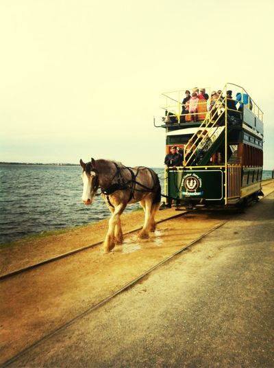 Horse Sea The Traveler - 2014 Eyem Awards