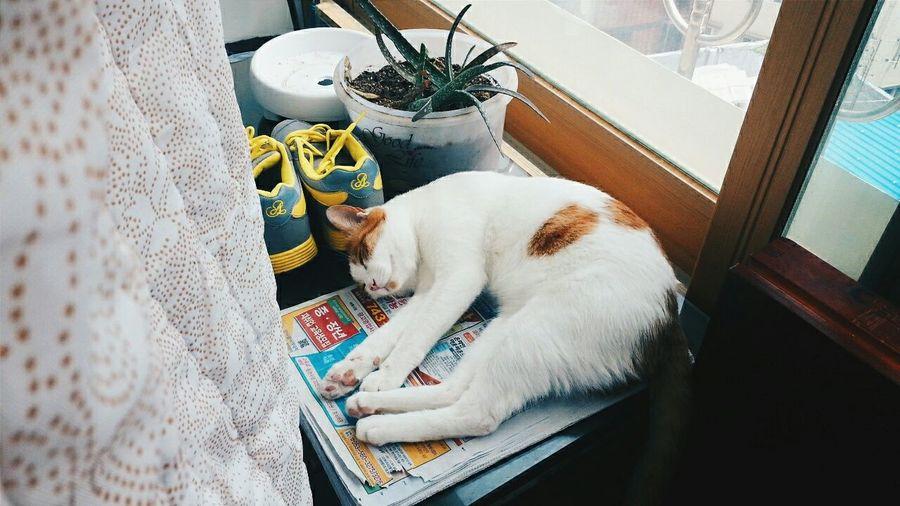 Cat Caturday