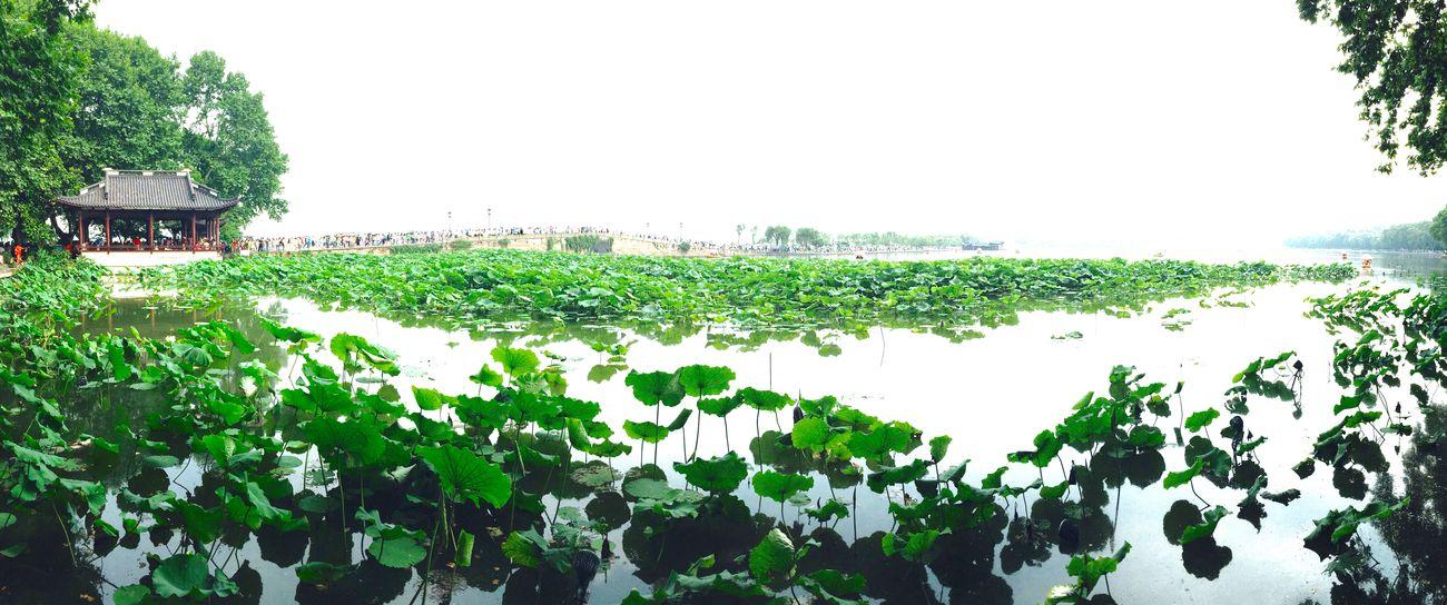 West Lake,Hangzhou Hangzhou Hangzhou,China Westlake West Lake Lotus Lotus Flower Summer Summertime Summer ☀