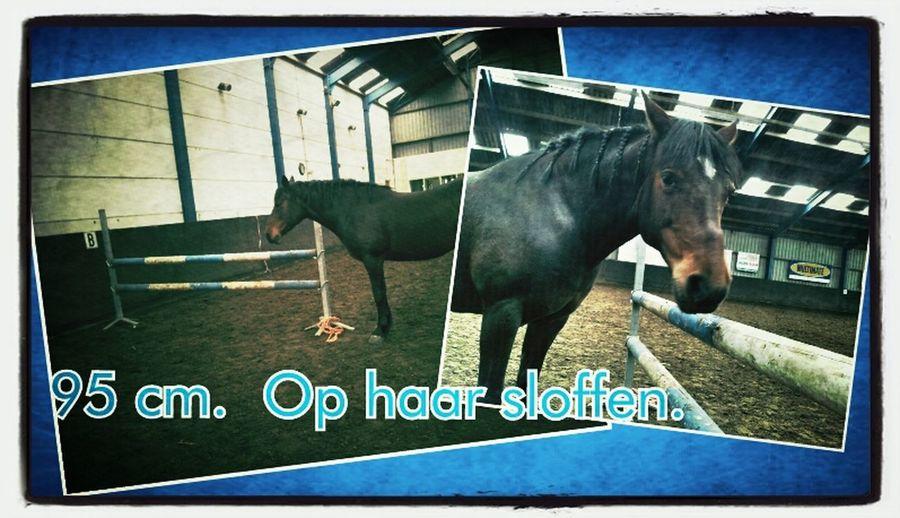 Horse Horses Haflo