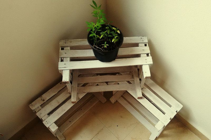Plant Equilibrio Pachamama