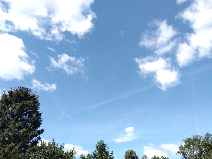 Tree Blue Forest Sky Cloud - Sky