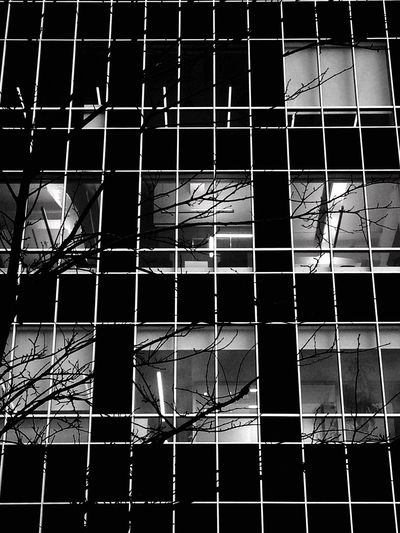 branches in windows Architecture Built Structure Low Angle View Building Exterior Pattern Day Outdoors No People Occupation Sky Blackandwhite Bw Photography Bwphotography Blackandwhite Photography Blackandwhitephotography Architecture_collection Architectural Detail Architecturelovers