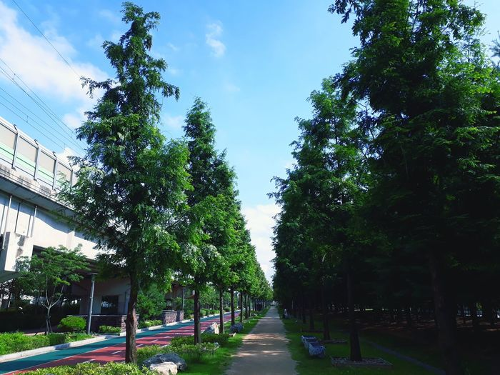 산책로 구름 하늘 풍경 Korea 필터 Treval Blue Blue Sky 길 산책로 Tree Sky Architecture Cloud - Sky Treelined