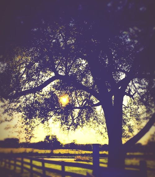 Country life Tree Plant Nature Sky No People Silhouette Sunlight Outdoors Beauty In Nature Tranquility Low Angle View Growth Day