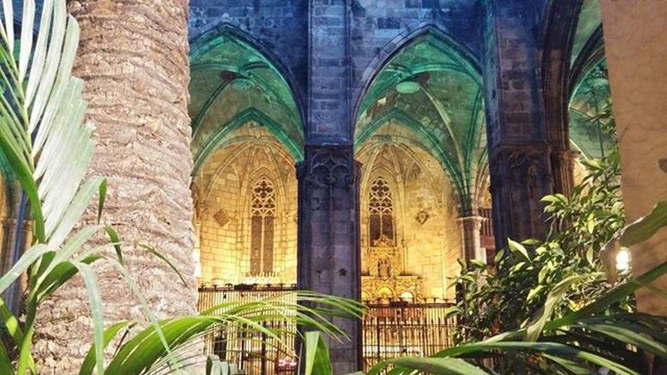 Claustro Cloister Cloitre Luostari Catedral Cathedral Tuomiokirkko Cathedrale Barcelona Bcnexplorers Bcndreamers Thebarcelonist Livelovebarcelona Catalunya Catalonia Catalunyaexperience Ok_catalunya