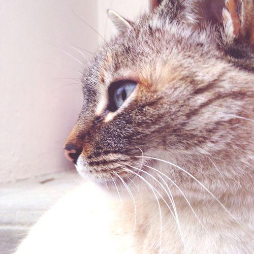 EyeEmNewHere Mycat♥ Bella