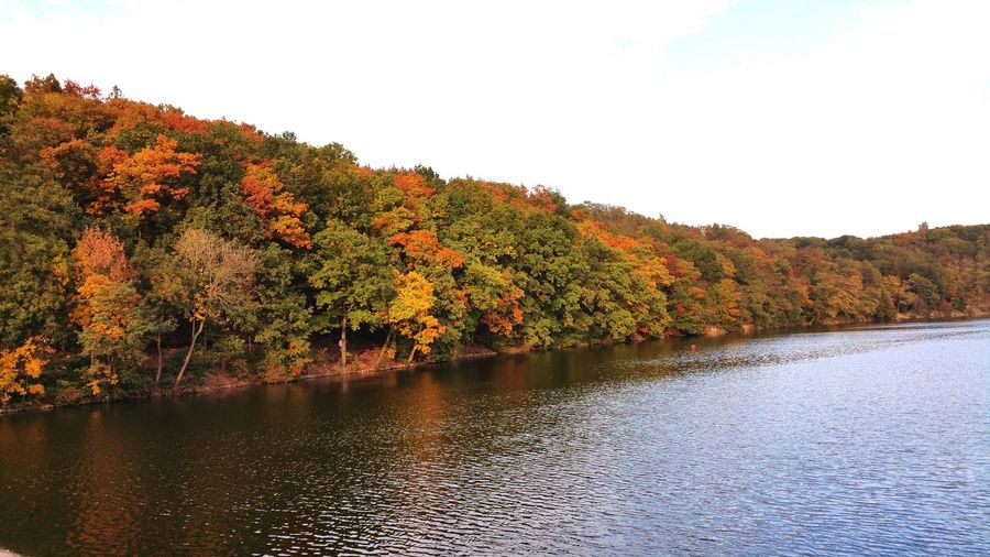 Autumn Multi Colored Tree Lake Water No People First Eyeem Photo Nature Scenics Beauty In Nature Love Photography Outdoors Relax Good Morning Prague Czech Republic