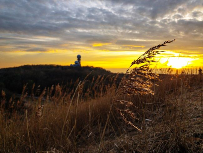 Oat in the evening sun in front of the Teufelsberg Radar Station Berlin Golden Hour Wild Oats Oat Sunset Growth Nature Sky Tranquil Scene Cloud - Sky Field Scenics Silhouette Beauty In Nature Tranquility No People Plant Grass Landscape Close-up
