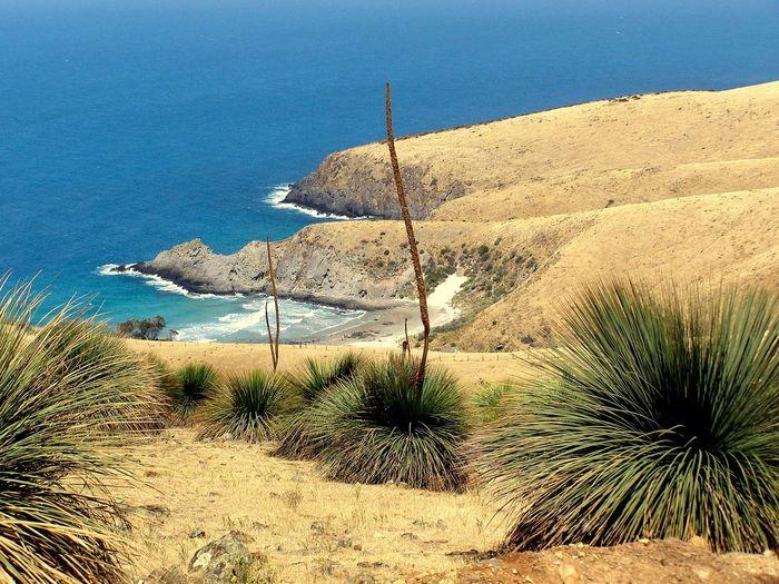 Deep Creek CP Australia Beach Coastline Environmental Conservation Grasstrees Ocean Outdoors Sea Seascape