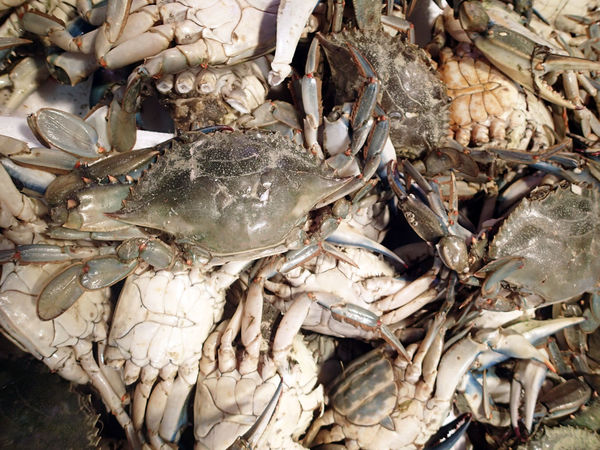 50+ Crustacean Pictures HD | Download Authentic Images on EyeEm
