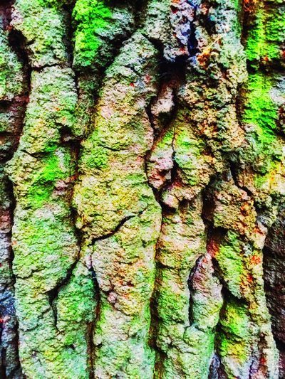 Trippin' on bark. Wood Trees Bark Treebark TreePorn Colourful Vivid Multicolors  Shapes Shapes In Nature