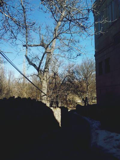 Gesi Baglari Tree Sky Clear Sky Nature Kayseri Turkey