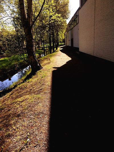 Tree The Way Forward Built Structure Sunlight Day Shadow Outdoors Architecture No People Walkway Nature Building Exterior Urban Nature Rauma Ganal Live For The Story