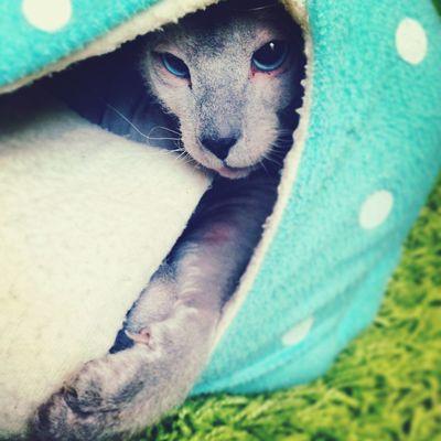 Cat Cute Pets Style
