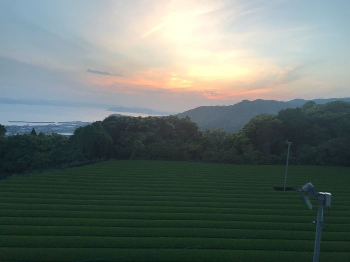 Sea And Mountain Tea Plantation  茶畑 Sky Scenics - Nature Beauty In Nature Tranquil Scene Plant Tranquility Landscape Sunset Nature Cloud - Sky