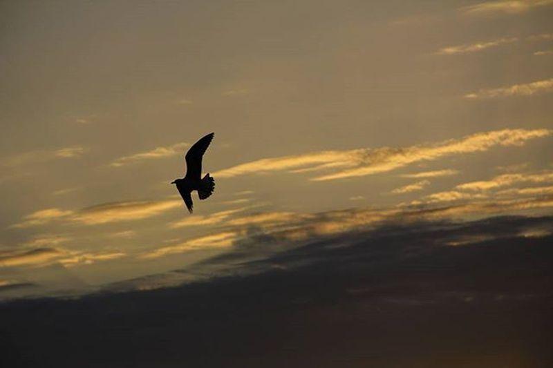 Uccello Involo Bird Zog Cielo Sky Qiell Re Clouds Nuvole Tramonto Sunset Perendim