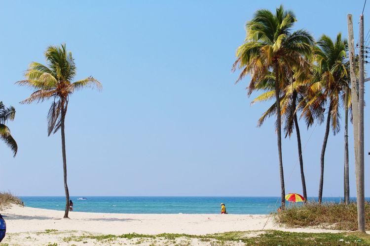 The Great Outdoors - 2017 EyeEm Awards Palm Tree Sea Beach Horizon Over Water Vacations Sky CUBA! Havanna, Cuba Travel Destinations Sand