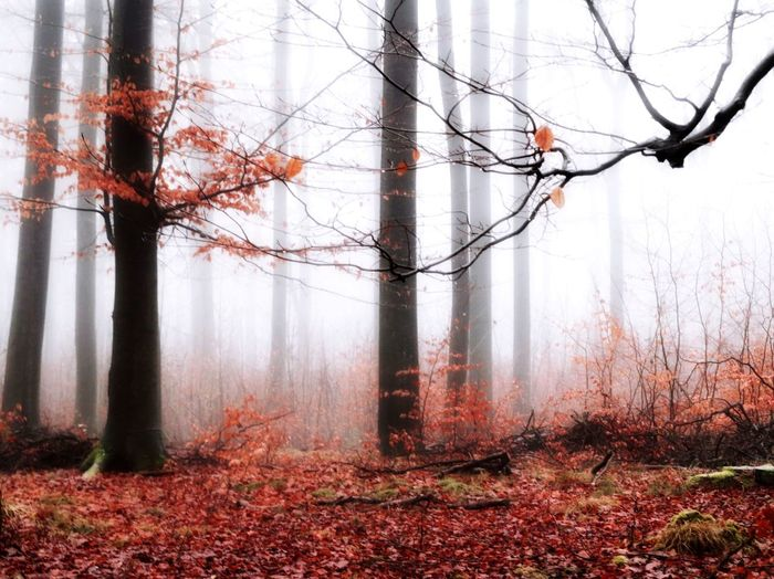 Agriculture Fog Foggy Mist Tree Nature Scenics Outdoors Tree Trunk Forest Fire Environmental Damage Beauty In Nature Destruction Landscape Tranquility Beauty In Nature Winter Forest Bare Tree No People Tree Nature