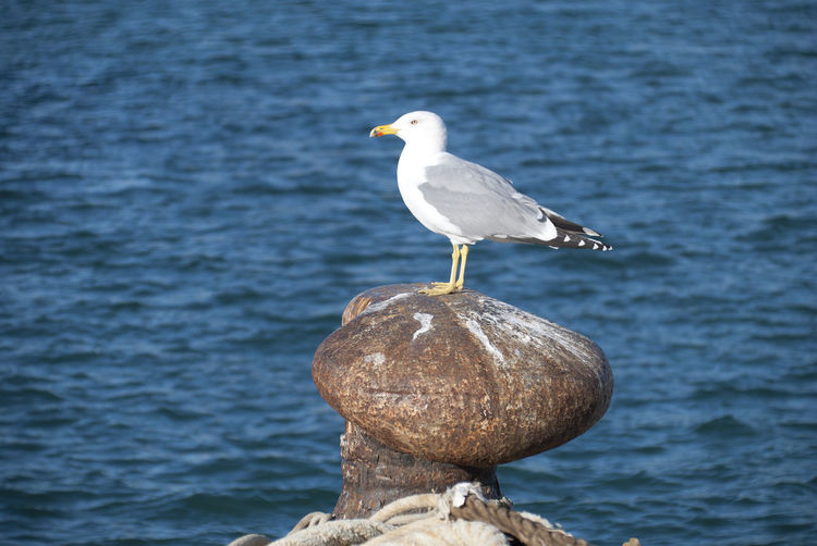 Gaviota. Animal Wildlife Bird Animal Themes Animal Vertebrate One Animal Water Perching Sea No People Seagull Day Nature Focus On Foreground Solid Bollard Barcelona Harbor