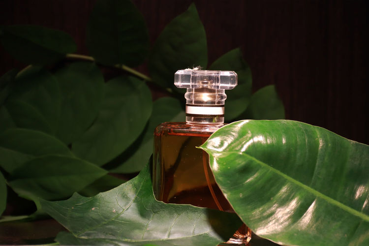 Close-up of green leaves on bottle