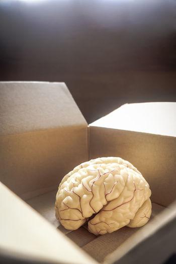 Brain inside an