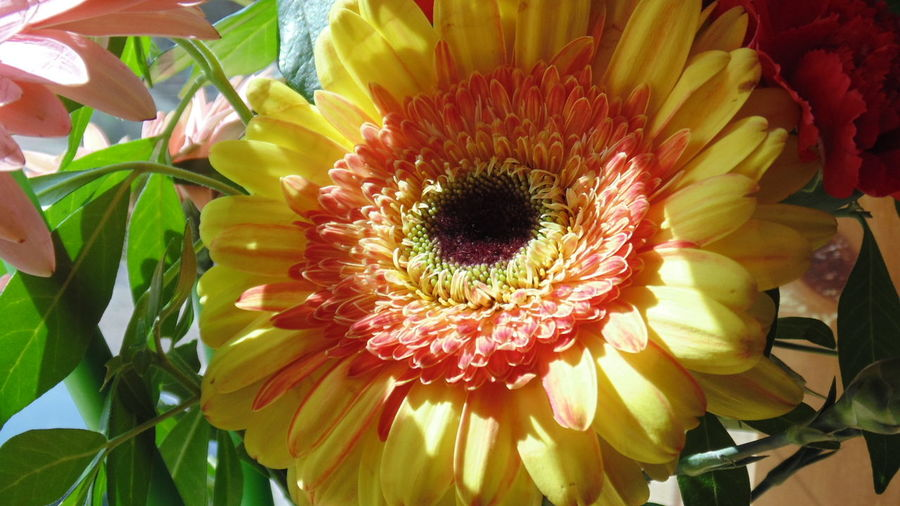 Gerberas Flower Collection Flowers, Nature And Beauty Flowers,Plants & Garden