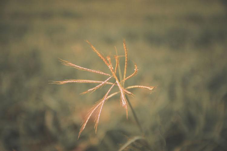 Grass Orange