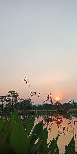 Bird Water Sunset Tree Lake Rice Paddy Flying Reflection Sky Animal Themes