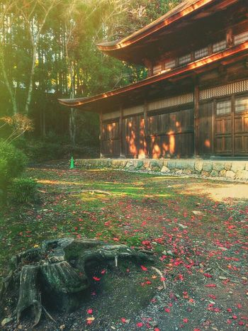 Last warm The Five Senses Landscape Painterly Painted Pictures Combo Apps Culture Of Japan Architecture Beatiful Japanesque Trees
