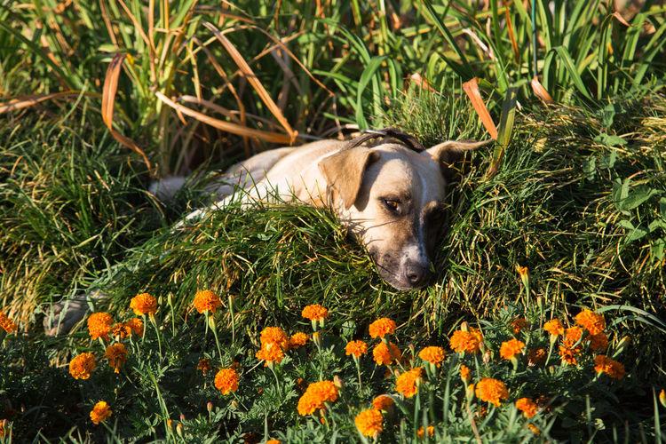 Dog lying down on grass