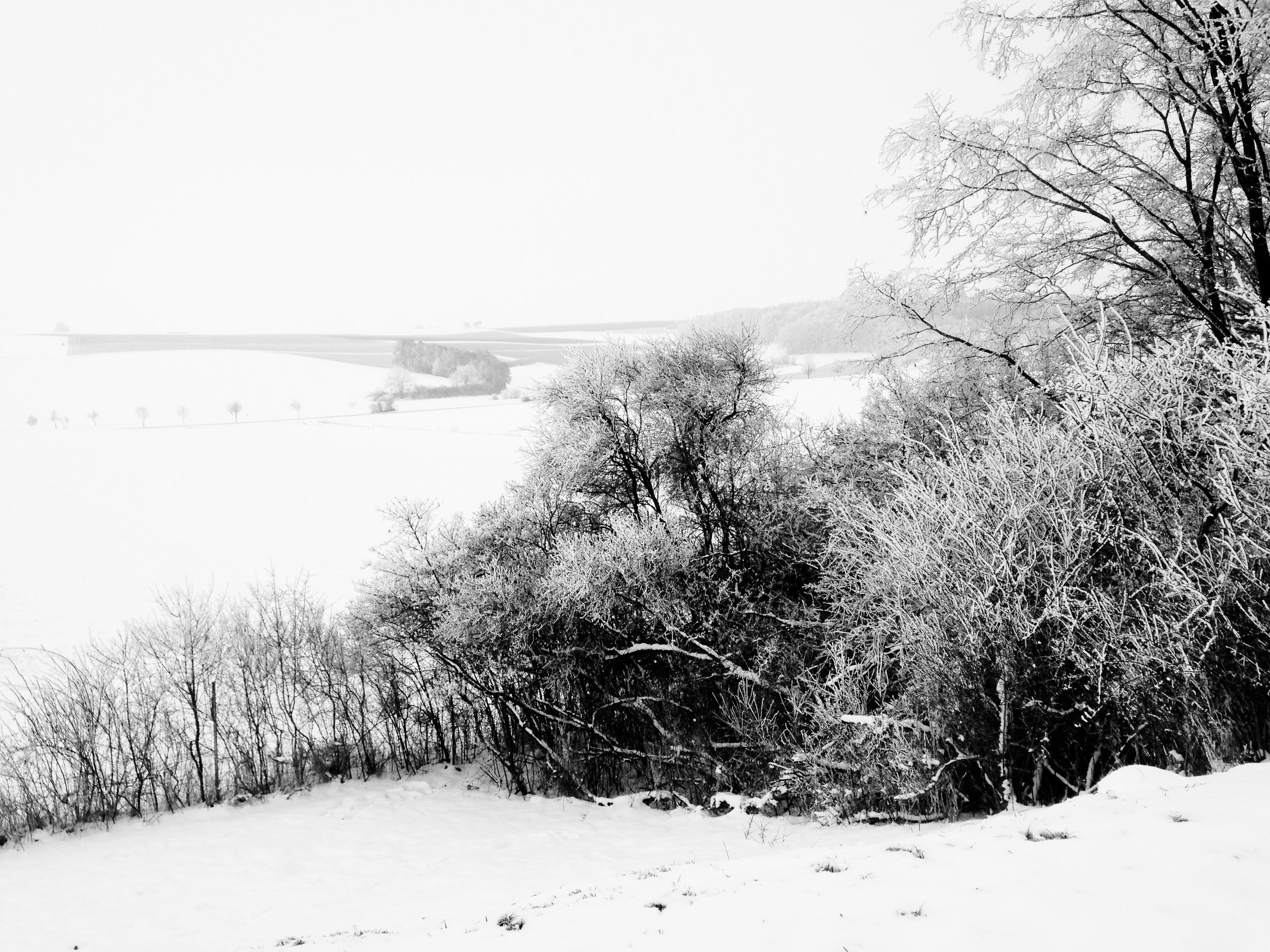 snow, winter, cold temperature, season, tree, weather, tranquil scene, tranquility, covering, clear sky, landscape, beauty in nature, scenics, nature, frozen, white color, snow covered, bare tree, non-urban scene, covered