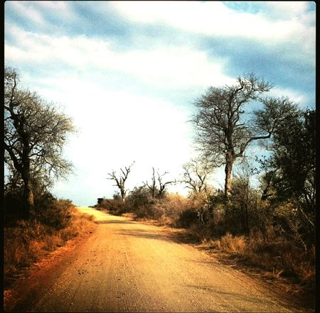 Tree Sky Road Nature Rural Scene The Way Forward Day Landscape Bushes And Trees Africa Bushveld Newest Talent Best Photos