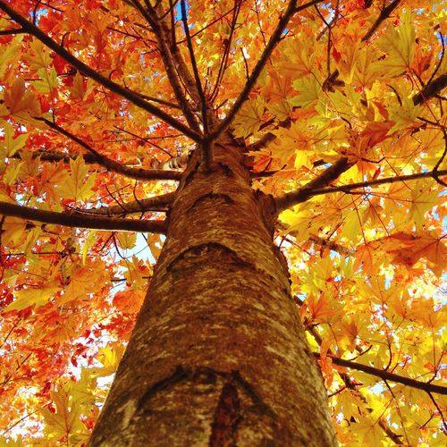 Firstdayoffallyall Colors Of Autumn Autumn Leaves Nature Photography Fall Beauty