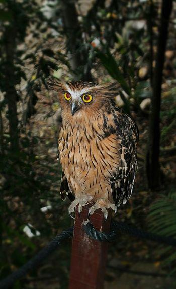Owl Owl Eyes
