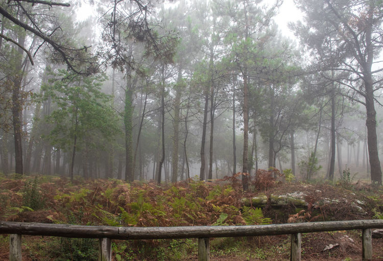 Fog In The Forest Nature