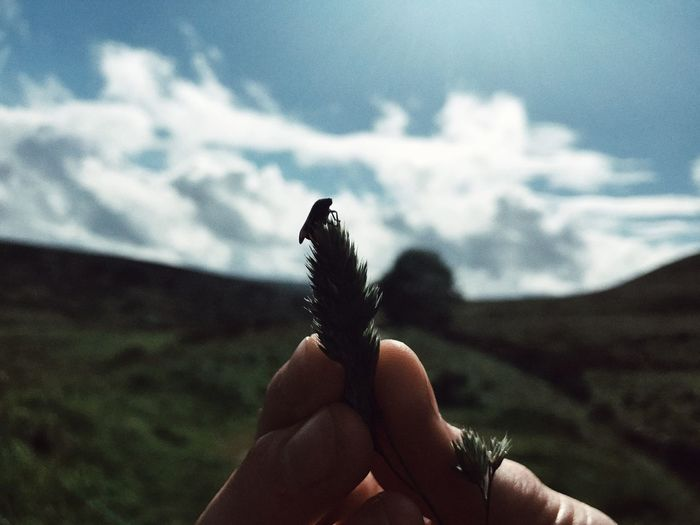 Close-up of person holding stick against sky