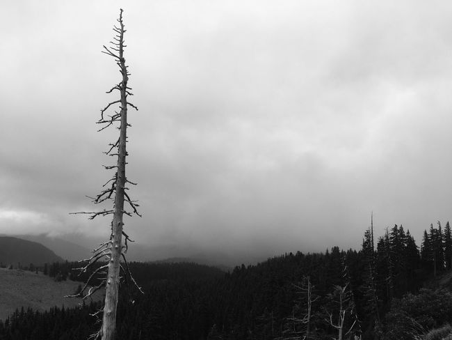 Relaxing Taking Photos Enjoying Life Forest Black & White Outdoors Foggy Weather Mt Hood