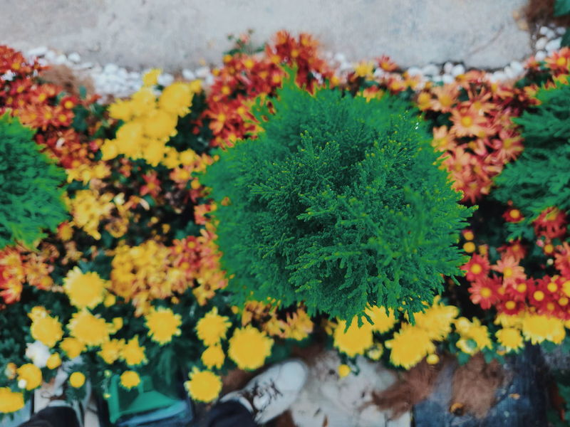 top angle of trees Top View Plant Trees Nature_collection Green Nature_lovers Flora Nature_collection Flower Head Flower Yellow Leaf Close-up Plant Green Color Blossoming  Young Plant