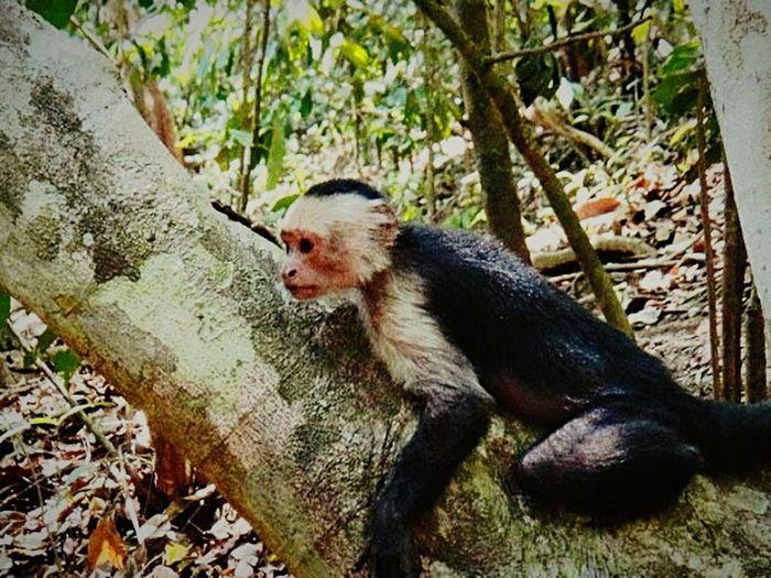 The Traveler - 2015 EyeEm Awards Wild Monkey Friendly Neighbor Jungle Life