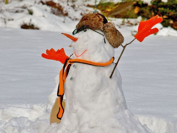 Animals In The Wild Close-up Cold Temperature Day Focus On Foreground Nature No People Outdoors Perching Silly Winter Things Snow Snowman Snowman Face Winter Winterfun Snow ❄ Shades Of Winter
