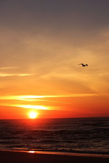 Flying solo Flying Sun Orange Color Bird One Animal Beauty In Nature Horizon Over Water Beach Sky Animals In The Wild Silhouette Nature Live For The Story The Great Outdoors - 2017 EyeEm Awards Breathing Space