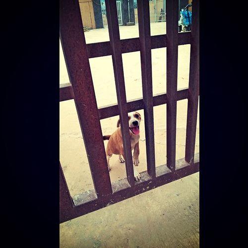 LonelyDog Clickingafterlongtime Puppydog Trapped Bow :P