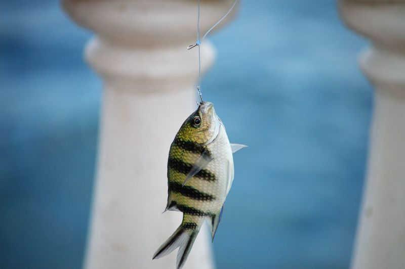 Close-up of fish against blurred background
