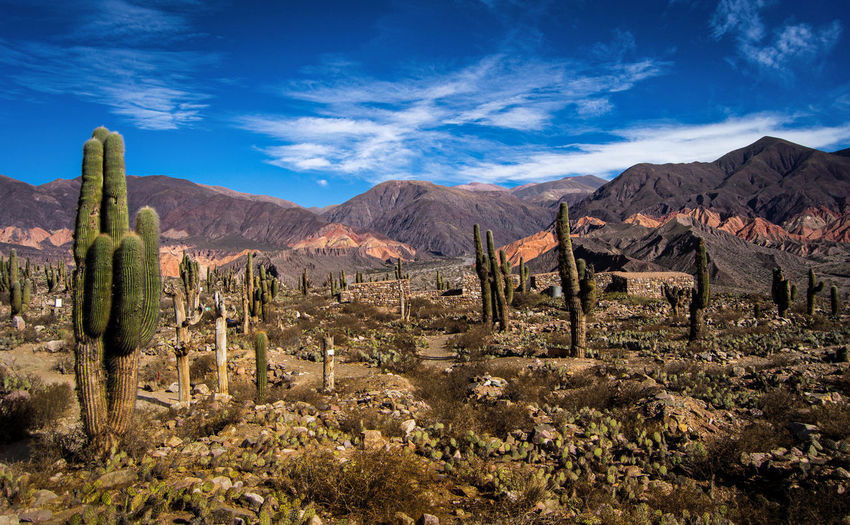 View of cactus plants on landscape