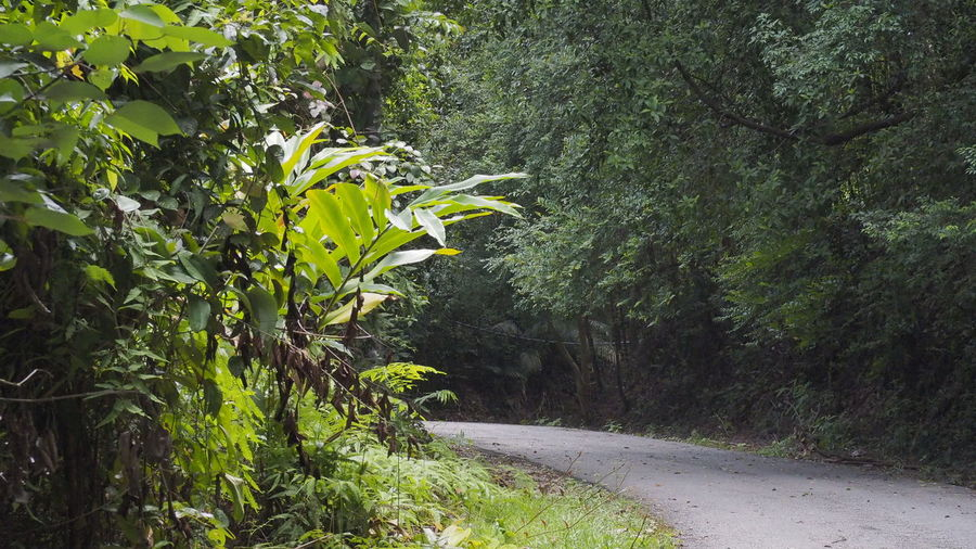 into the forest Oxygen Empty Road Sunlight Growth Green Color Nature Outdoors Plant Day Leaf Tree No People Beauty In Nature Freshness