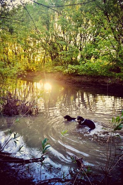 Atardecer Sunset Dogslife