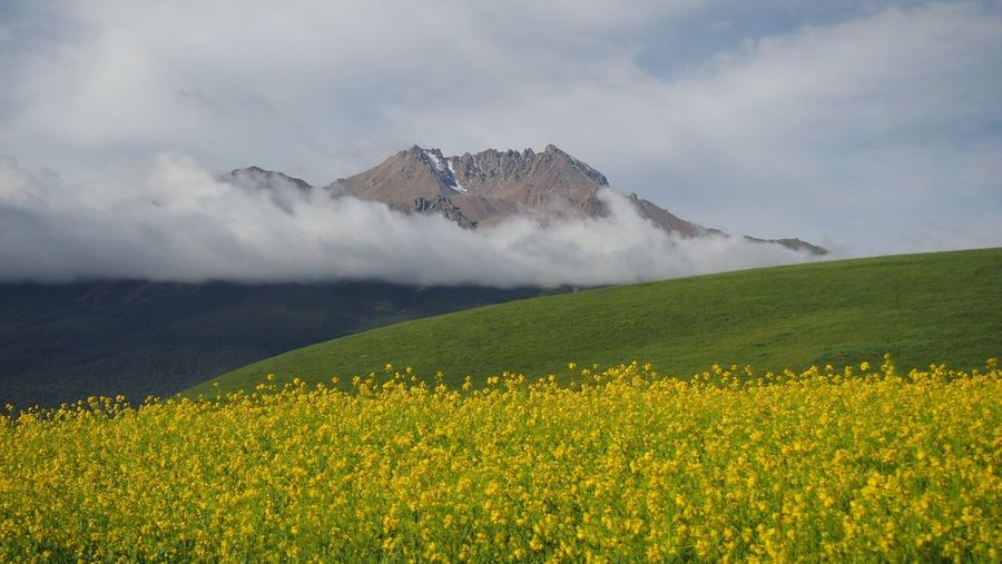 Oilseed rape field against mountain during foggy weather