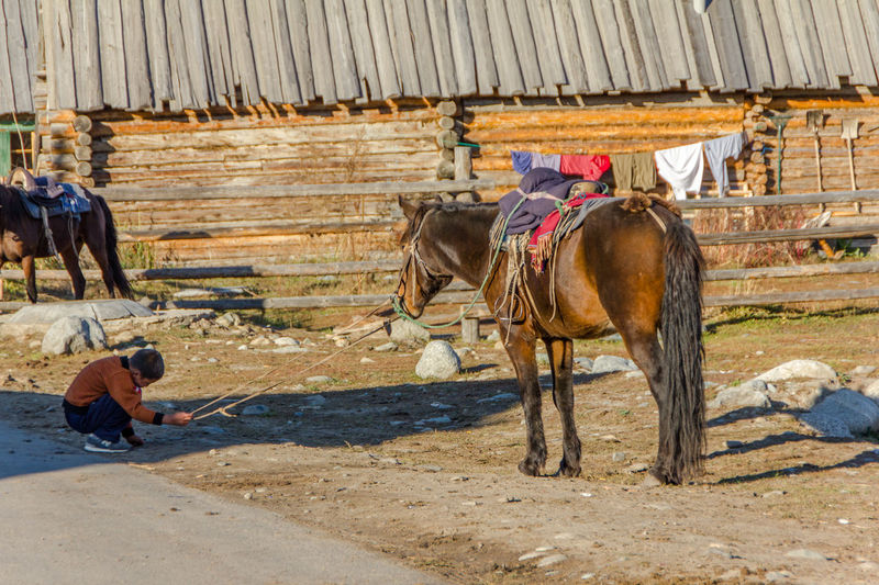 time to call it a day...Day Domestic Animals Horse Livestock Mammal Nature Outdoors Working Animal EyeEmNewHere IMography Rural Scene Rural Landscape Rural Life Rural Living Rural Lifestyle Rural Scenes Nature Landscape_Collection